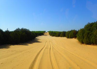 2016-Parque Nacional y Natural de Doñana - Huelva